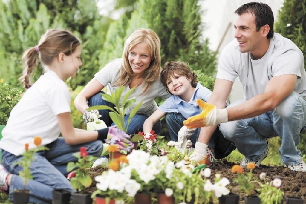 ทำสวน การปลูกผักกินเอง